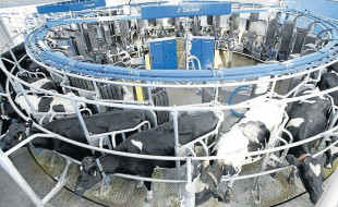 Rotational Robotic Milking System